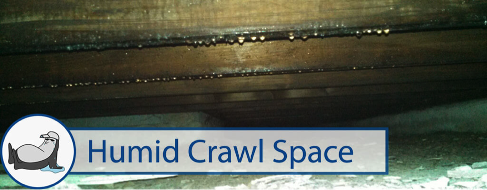 Humid Crawl Space